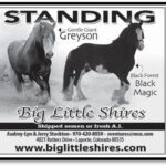 BigLittleShires